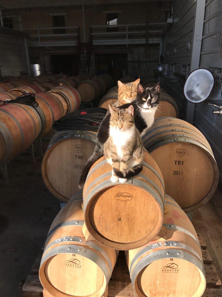Osa viineistä kypsyy Carsinin 150 tammitynnyrissä. Kypsymistä odottelevat kissat Marie, Toulouse and Berlioz.